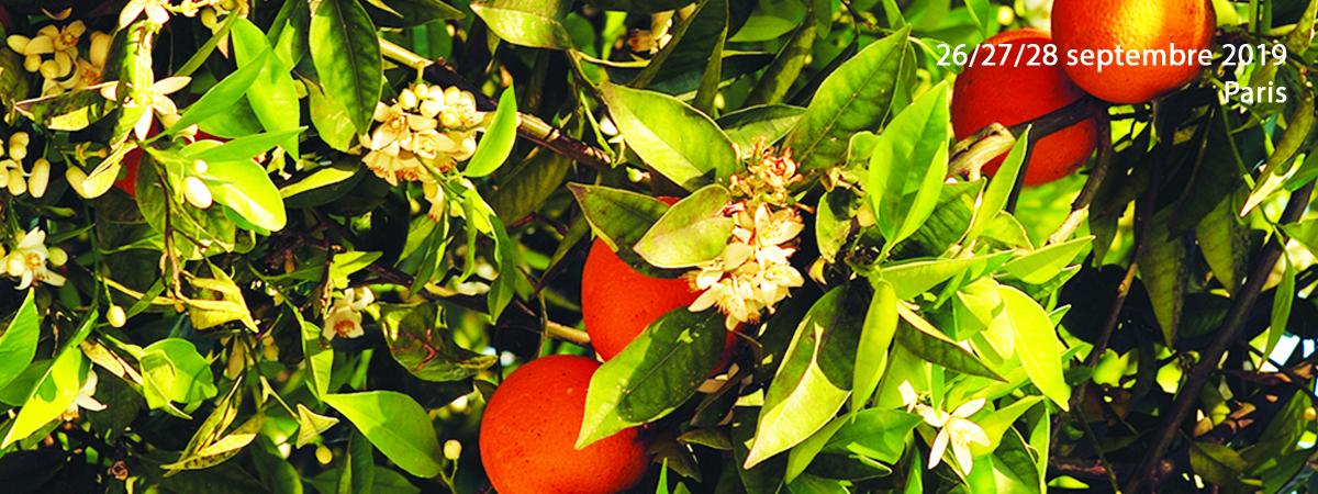 Permalien vers:Apport des huiles essentielles et de l'aromathérapie